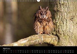 Owls (Wall Calendar 2015 DIN A3 Landscape)
