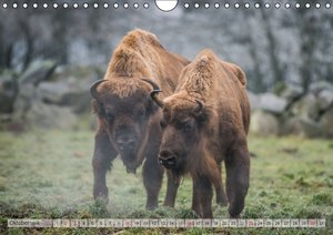 Emotionale Momente: Der Wisent. (Wandkalender 2016 DIN A4 quer)