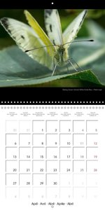 British Invertebrates (Wall Calendar 2015 300 × 300 mm Square)