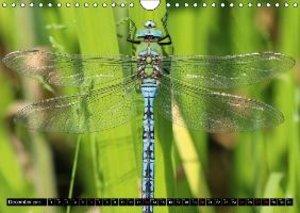 Dragonflies in Hamburg (Wall Calendar 2015 DIN A4 Landscape)