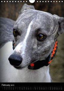 Beautiful Whippets (Wall Calendar 2015 DIN A4 Portrait)