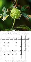 Floral Beauties (Wall Calendar 2015 300 × 300 mm Square) - zum Schließen ins Bild klicken