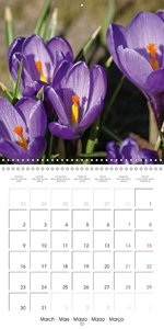 Floral Beauties (Wall Calendar 2015 300 × 300 mm Square)
