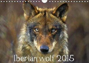 Iberian Wolf 2015 (Wall Calendar perpetual DIN A4 Landscape)
