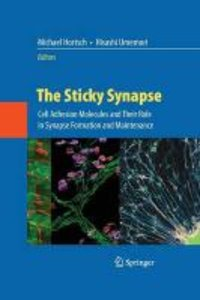 The Sticky Synapse