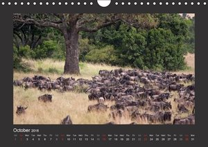 K E N Y A - UK Version (Wall Calendar 2016 DIN A4 Landscape)