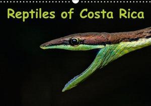 Reptiles of Costa Rica / UK-version (Wall Calendar 2015 DIN A3 L