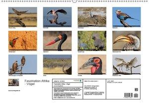 Faszination Afrika - Vögel