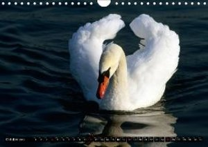 SWANS / UK-version (Wall Calendar 2015 DIN A4 Landscape)