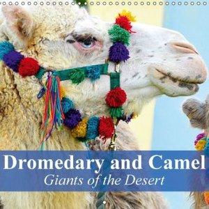 Dromedary and Camel - Giants of the Desert (Wall Calendar 2015 3