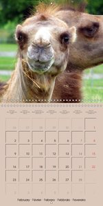 Dromedary and Camel - Giants of the Desert (Wall Calendar 2015 3