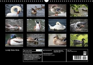 Lovely Water Birds (Wall Calendar 2015 DIN A3 Landscape)