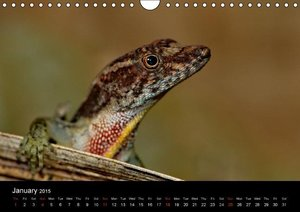 Reptiles of Costa Rica / UK-version (Wall Calendar 2015 DIN A4 L