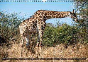 Südafrika - Die Tierwelt (Wandkalender 2016 DIN A3 quer)