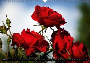 Rot - Red - Rosso - Rouge (Wandkalender 2017 DIN A3 quer)