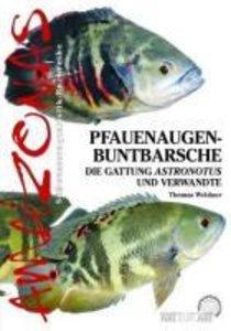 Pfauenaugen-Buntbarsche