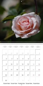 Delicate Beauties - Magnificent Roses (Wall Calendar 2015 300 &t