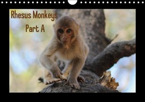 Rhesus Monkeys Part A / UK-Version (Wall Calendar 2015 DIN A4 La