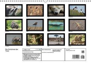 Die Schönheit der Tiere (Wandkalender 2016 DIN A3 quer)