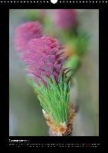 Bassler, C: Flowerdreams/UK-Version