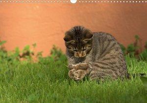 Tierische Momente (Posterbuch DIN A4 quer)