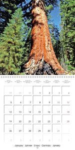 Forests - Green jewels of the earth (Wall Calendar 2015 300 × 30