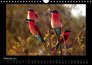 Bee - Eater - African Flying Gemstones / UK-Version (Wall Cale