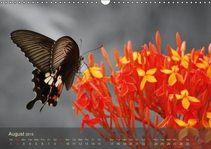 Delicate Beauties Exotic Butterflies / UK-Version (Wall Calendar