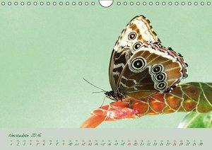 Edelfalter - 2 - (Wandkalender 2016 DIN A4 quer)