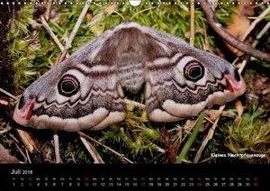 Seltene Schmetterlinge (Wandkalender 2016 DIN A3 quer)