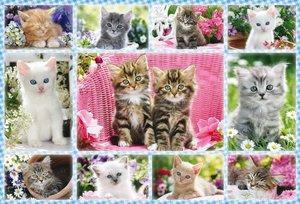 Katzenbabies. Puzzle 100 Teile
