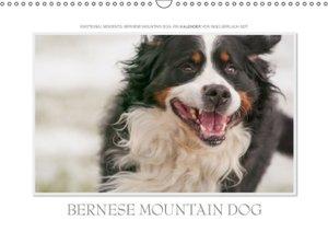 Emotional Moments: Bernese Mountain Dog. UK-Version (Wall Calend