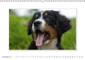 Emotional Moments: Bernese Mountain Dog. UK-Version (Wall Calend