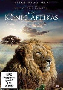 Der König Afrikas-Die Geschichte eines Löwen