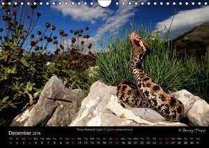 REPTILES / UK-Version (Wall Calendar 2016 DIN A4 Landscape)