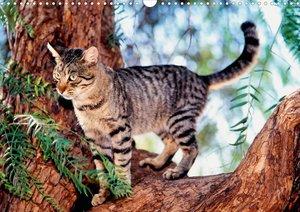 Katzen (Posterbuch DIN A3 quer)