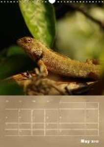 Agamids - Lizards from the Primeval Times (Wall Calendar 2015 DI