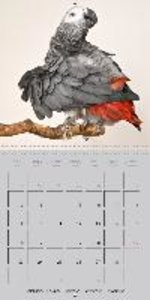 Lovely African Greys (Wall Calendar 2015 300 × 300 mm Square)