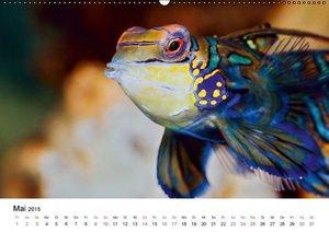 Kulartz, R: Fischzauber - Wundervolle Aquarienfische (Wandka