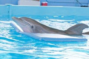 Mein Freund, der Delfin 1