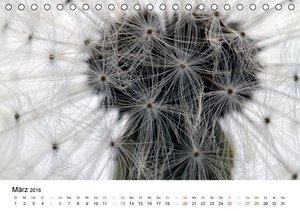 Pusteblume im Detail (Tischkalender 2016 DIN A5 quer)