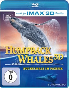 Humpback Whales - Buckelwale im Pazifik