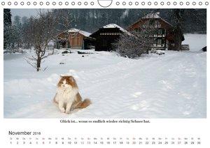 Happy Cats (Wandkalender 2016 DIN A4 quer)