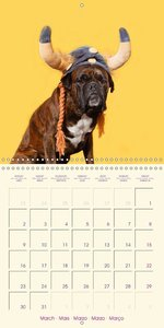 German Boxer (Wall Calendar 2015 300 × 300 mm Square)