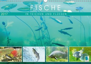 Fische in Teichen und Flüssen