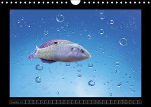 Hultsch, H: Kalendarische Unterwasserwelt (Wandkalender 2015