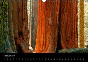 Bäume - Wegbegleiter der Natur
