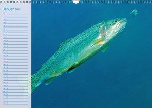 Fische - Leben im Fluss (Wandkalender 2016 DIN A3 quer)