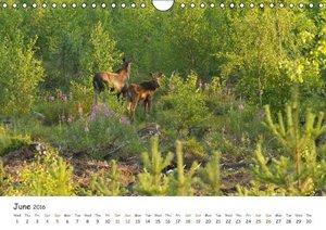 Wild North Karelia (Wall Calendar 2016 DIN A4 Landscape)