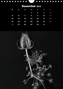 Trockenblumen Schönheiten in schwarz-weiß (Wandkalender 2016 DIN